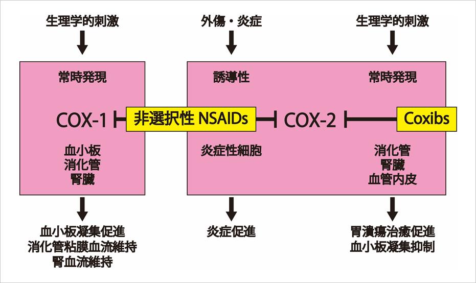 https://www.jspc.gr.jp/igakusei/img/keynsaids_pic02.png